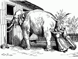 couple-trying-to-push-an-elephant-through-a-too-small-barn-door-will-not-fit-oddity-pen-ink-drawing-funny